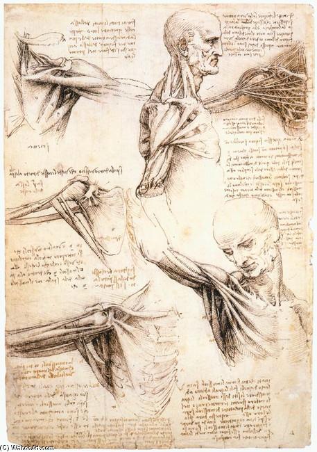 Anatomische Studien der Schulter, tinte von Leonardo Da Vinci (1452 ...