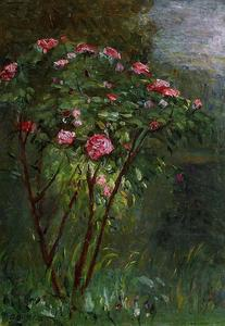 Gustave Caillebotte - rose `bush` in blume