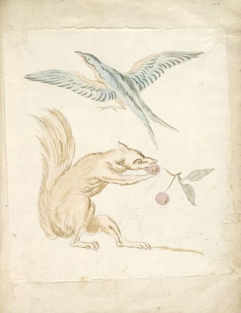 Squirrel Eating Cherries and Bird with Wings Gesamt von Jean-Baptiste Oudry (1686-1755, France)