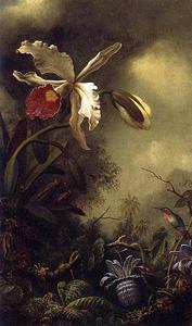 Martin Johnson Heade - White Orchid und Hummingbird