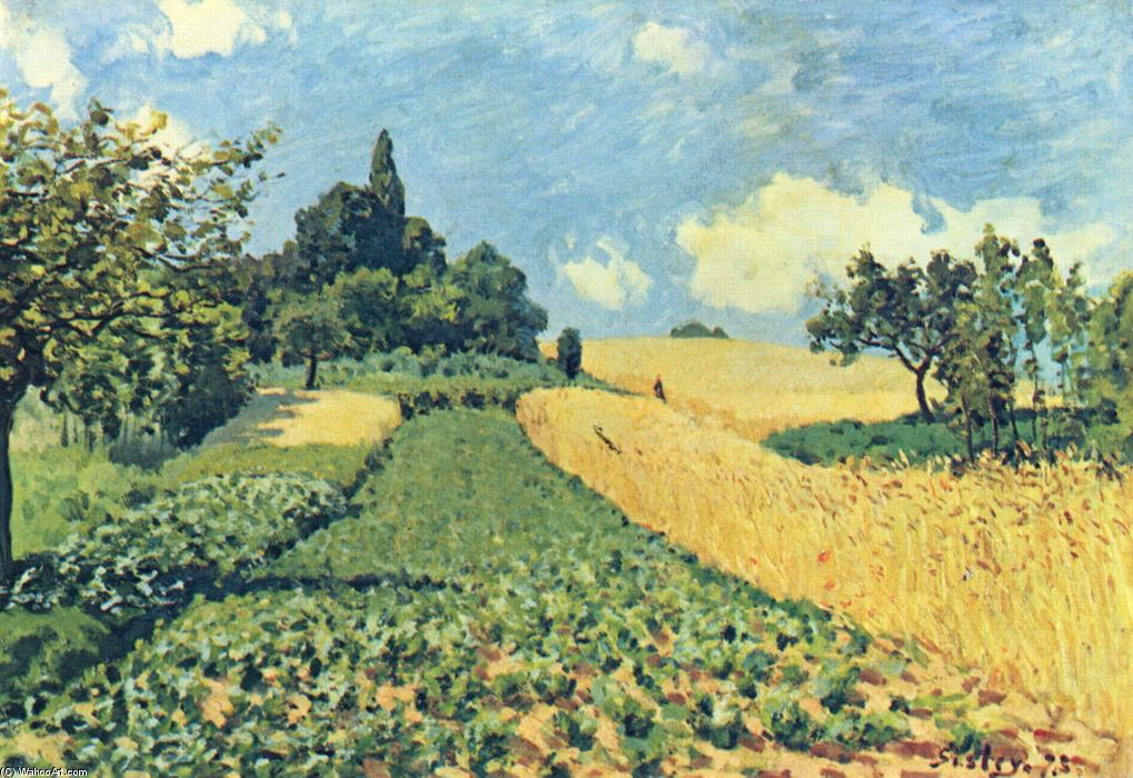 Grain fields on the hills of Argenteuil, öl auf leinwand von Alfred Sisley (1839-1899, France)