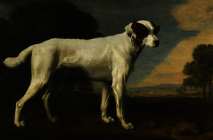 George Stubbs - Viscount Gormanston White Dog