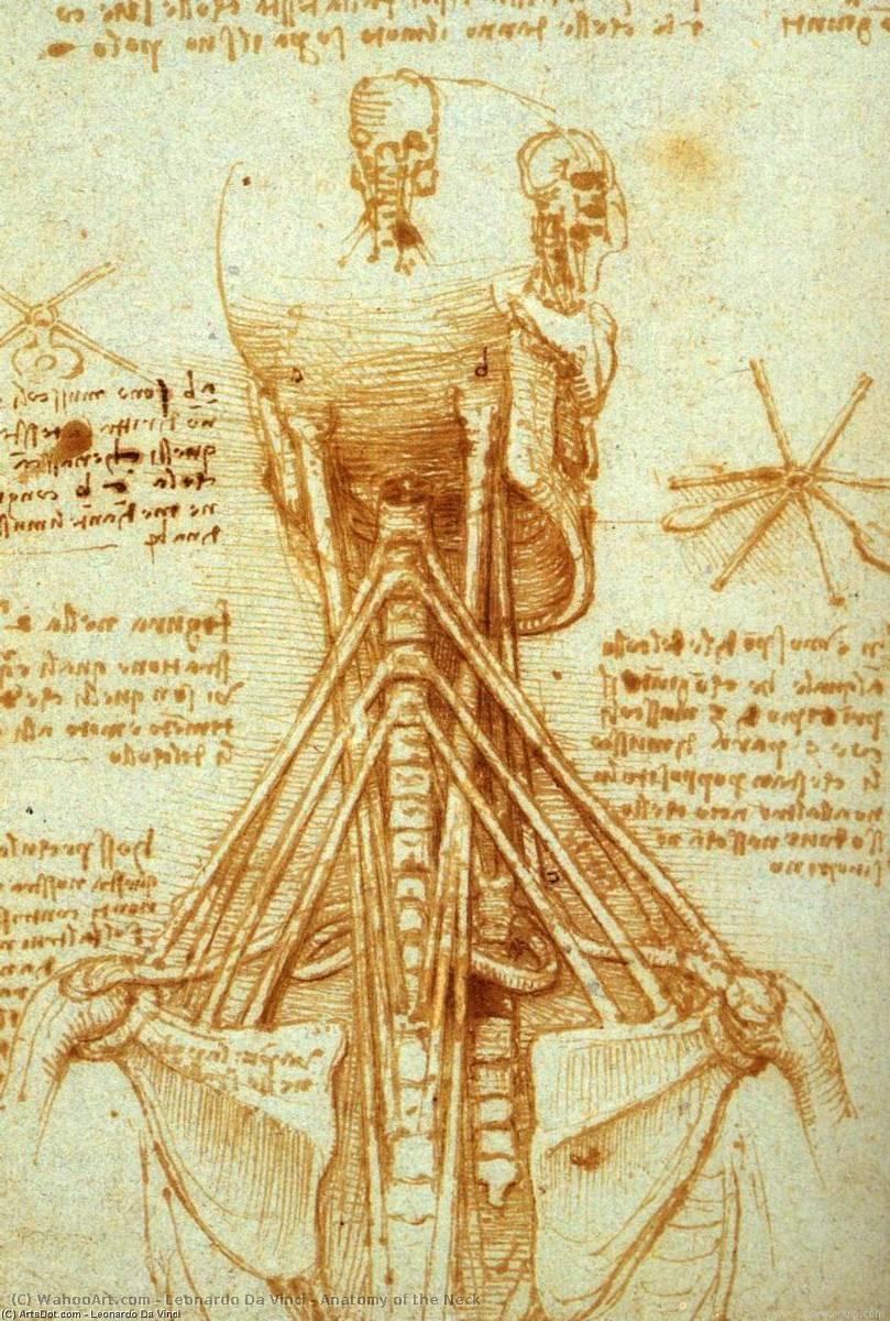 Anatomie des Halses, 1515 von Leonardo Da Vinci (1452-1519, Italy)