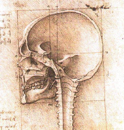 Ansicht eines schädel 2 von leonardo da vinci 1452 1519 italy