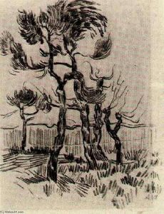 Vincent Van Gogh - Pine Bäume in Front of der Wall of das asyl 4