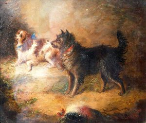 George Armfield (Smith) - A-Spaniel und Terrier