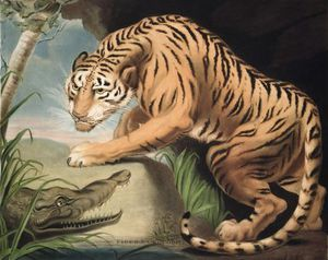 James Northcote - Tiger und Krokodil, Gravur