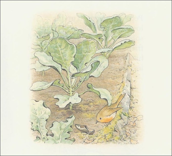 Peter Rabbit 13a - (11x11) von Beatrix Potter (1866-1943)
