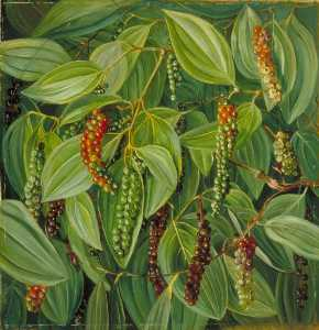 @ Marianne North (1277)