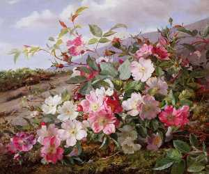 William Jabez Muckley - Heckenrose